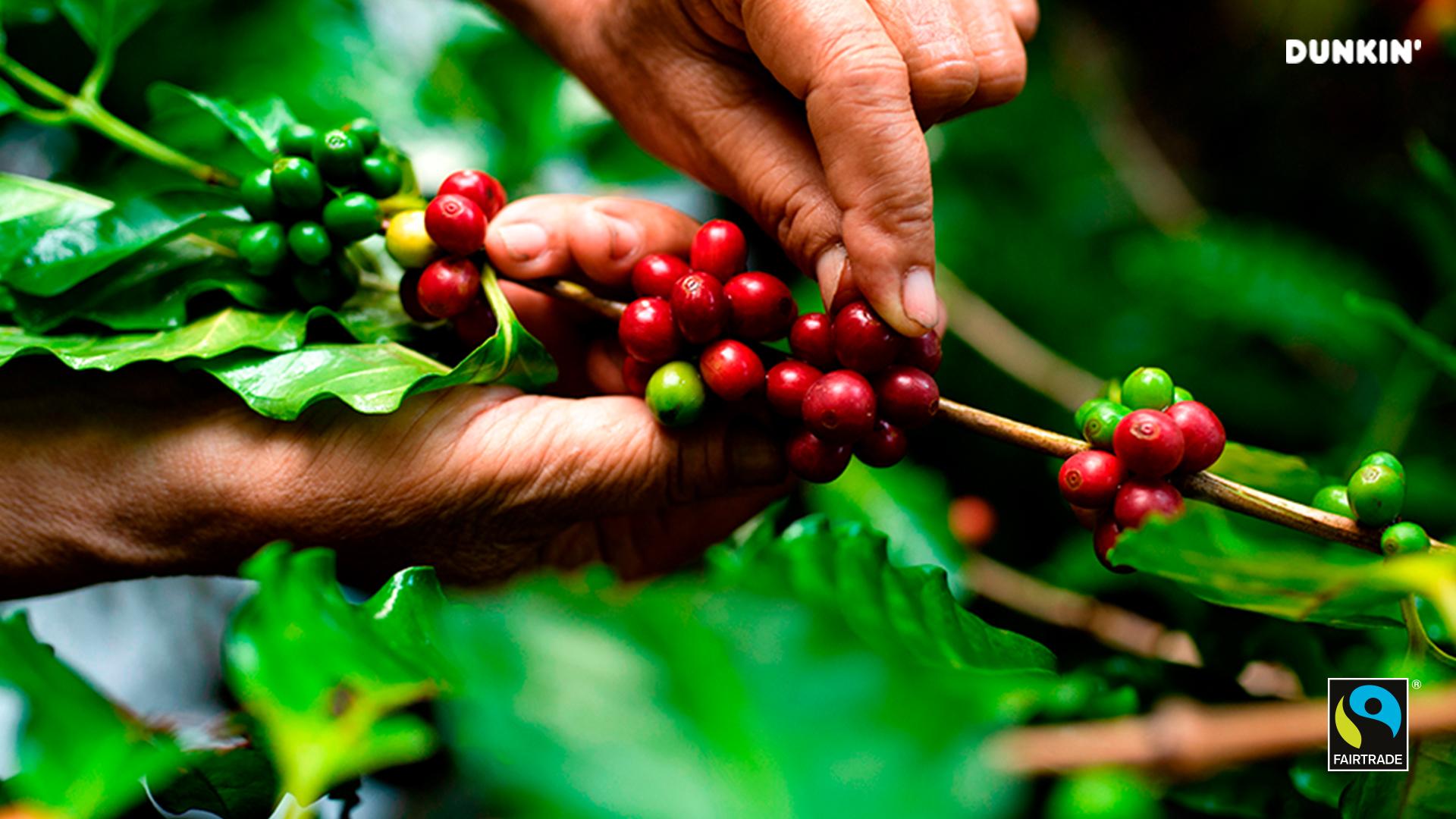 Dónde degustar un buen café, origen de los mejores cafés en el mundo